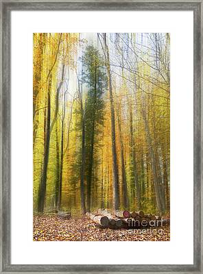 Abstract Wood Framed Print by Bruno Santoro