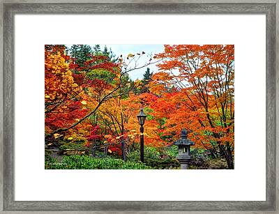 Abundant Beauty Framed Print by Sarai Rachel