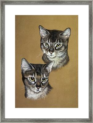 Abyssinian Cats Framed Print by Patricia Ivy