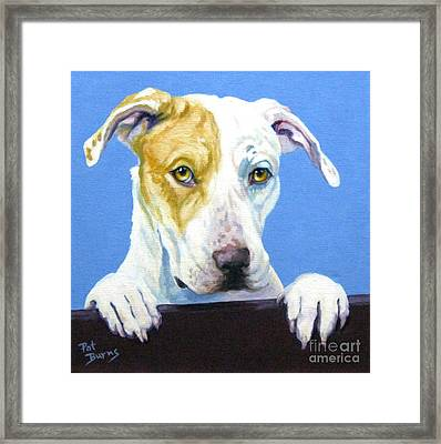 Ac Pup Framed Print by Pat Burns