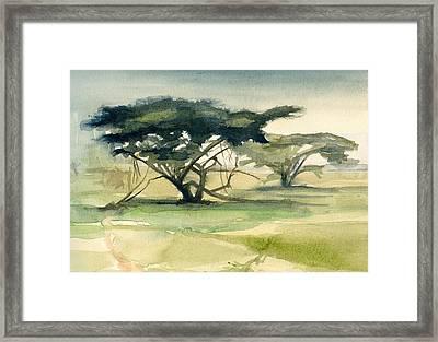 Acacia Framed Print by Stephanie Aarons