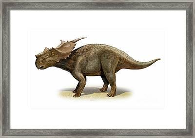 Achelousaurus Horneri, A Prehistoric Framed Print by Sergey Krasovskiy