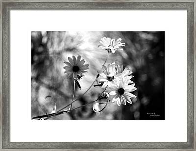 Achromatopsia Framed Print by Suzanne  McClain
