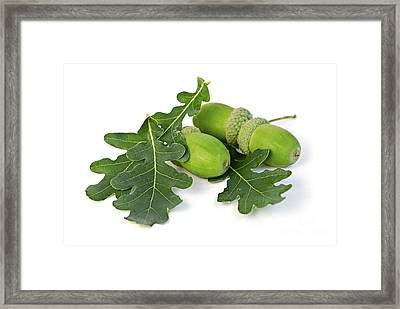 Acorns With Oak Leaves Framed Print by Elena Elisseeva