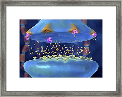 Action Of Serotonin Reuptake Inhibitors Framed Print by David Mack