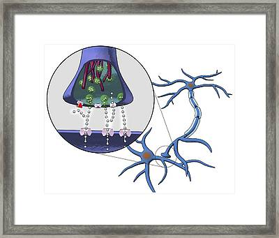 Action Of Serotonin Reuptake Inhibitors Framed Print by Equinox Graphics