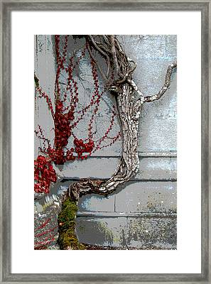 Framed Print featuring the photograph Adare Ivy by Charlie and Norma Brock