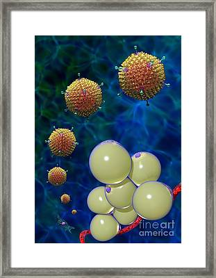 Adenovirus 36 And Fat Cells Framed Print