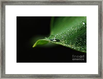 Adew Framed Print by Kendra Longfellow
