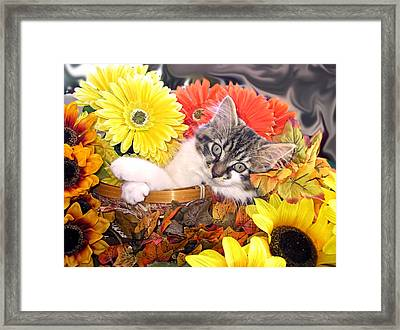 Adorable Baby Cat - Cool Kitten Chilling In A Flower Basket - Thanksgiving Kitty With Paws Crossed Framed Print