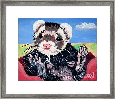 Adorable Ferret Framed Print by Phyllis Kaltenbach