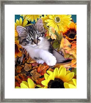 Adorable Kitten With Large Eyes Chilling In A Sunflower Basket - Kitty Cat With Paws Crossed Framed Print