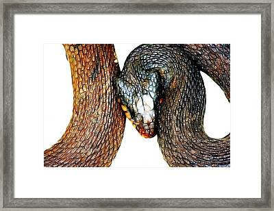 Adorable Snake Framed Print by Lisa Stanley