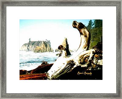 Framed Print featuring the photograph Adrift At Sea by Sadie Reneau