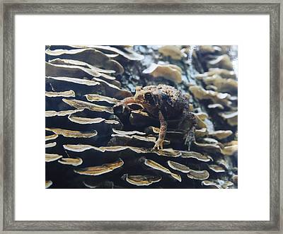 Framed Print featuring the photograph Adventurous Toad 2 by Gerald Strine