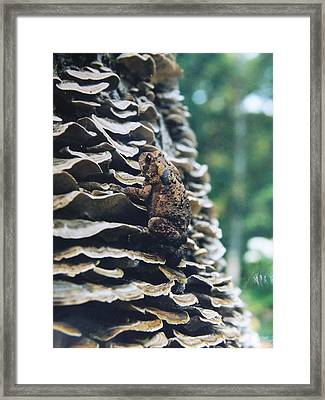Framed Print featuring the photograph Adventurous Toad by Gerald Strine