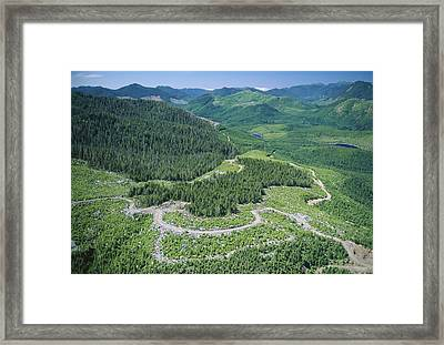 Aerial View Of A Regenerating Clear-cut Forest Framed Print