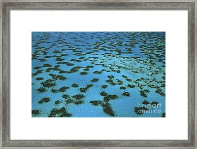 Aerial View Of Great Barrier Reef Framed Print by L Newman and A Flowers and Photo Researchers