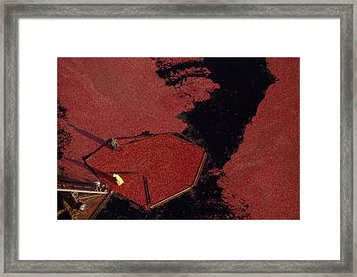 Aerial View Of The Harvesting Framed Print