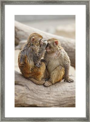 Affection Framed Print by George Oze