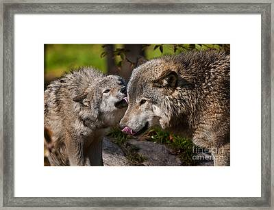 Affection Framed Print by Michael Cummings