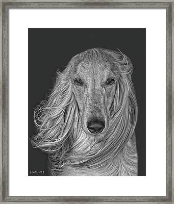 Afghan Hound   Framed Print by Larry Linton