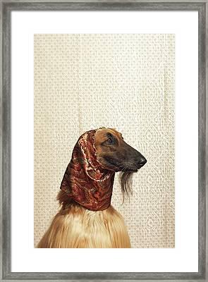 Afghan Hound Wearing Scarf Framed Print by Dtp