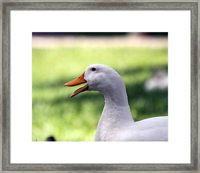 Aflac Framed Print by Jeanne Andrews
