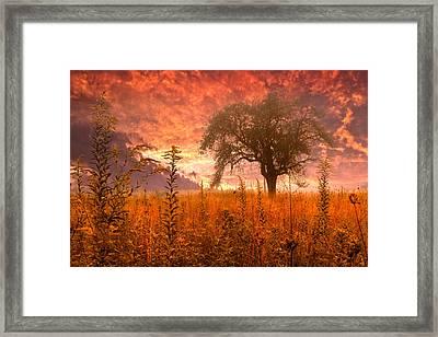 Aflame Framed Print by Debra and Dave Vanderlaan