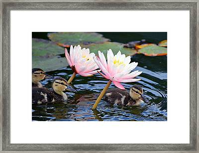 Afloat Among Lillies Framed Print by Fraida Gutovich