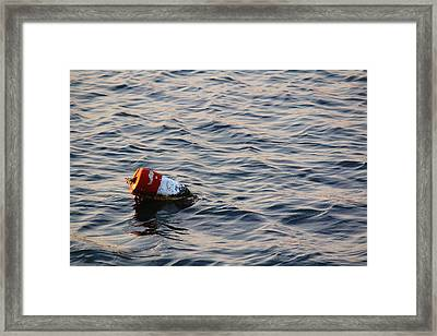 Afloat Framed Print by Andrew Pacheco