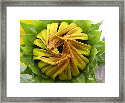 Framed Print featuring the photograph Afraid Photography by Tina Marie
