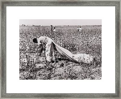 African American Day Laborer Picking Framed Print by Everett