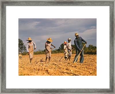African American Men And Women Chopping Framed Print by Everett