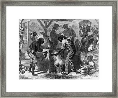 African American Slaves Using A Cotton Framed Print by Everett