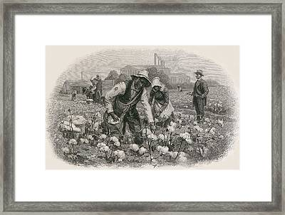 African Americans Pick Cotton Framed Print by Everett