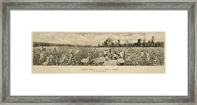 African Americans Working In A Cotton Framed Print by Everett