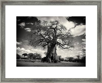 African Baobabs Tree Framed Print by Jess Easter