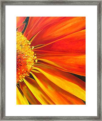 African Daisy Framed Print by Raette Meredith