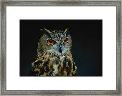 African Eagle Owls Are Among The 200 Framed Print by Joel Sartore