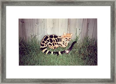 African Genet Framed Print by Val Oconnor