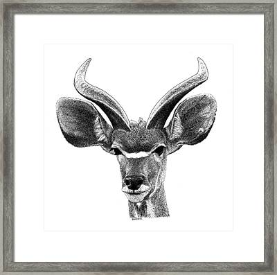African Kudu Framed Print