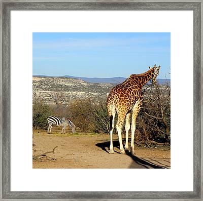African Safari In Arizona Framed Print by Kim Galluzzo Wozniak
