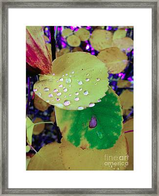 After Rain Framed Print by Michelle Bergersen