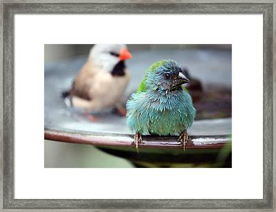 After The Bath Framed Print by Andrea  OConnell