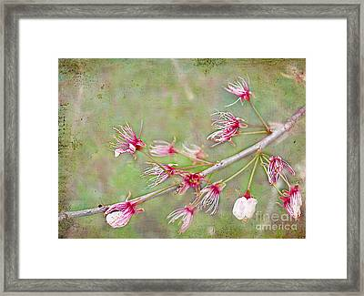 After The Party's Over Framed Print by Judi Bagwell