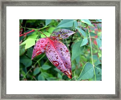 After The Rain Framed Print by Carolyn Marshall