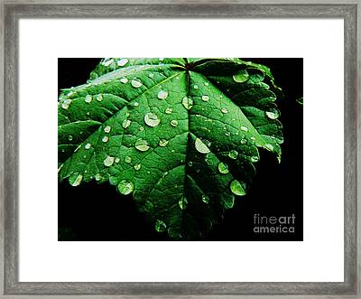 After The Rain Framed Print by Lin Haring