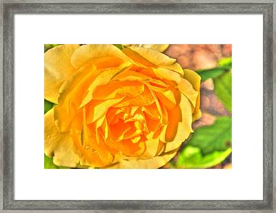 Framed Print featuring the photograph After The Rain by Michael Frank Jr
