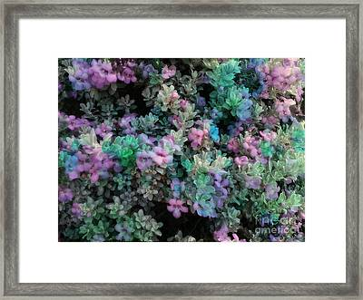 After The Rainbow.. Framed Print by Denisse Del Mar Guevara